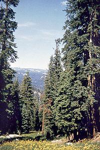 boschi in montagna